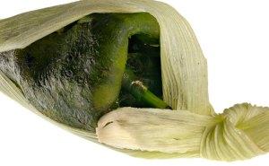 Chile relleno de tamal de elote